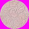 Culotte Tramonte in pizzo colore CIPRIA
